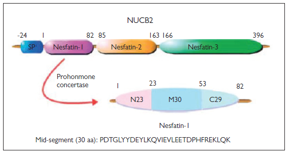 Regulatory Peptide Nesfatin-1 and its Relationship with Metabolic Syndrome